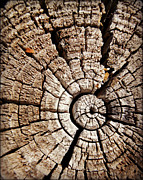 Carol Toepke Prints - Crosscuts of Wood 6 Print by Carol Toepke