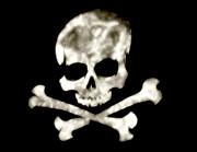 Cindy Nunn - Crossed Bones