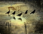 Avian Art Metal Prints - Crossing Metal Print by Gothicolors And Crows