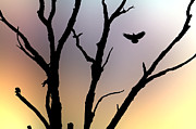 Lincoln Photo Originals - Crow and barren Tree Washington DC 2006 by John Hanou
