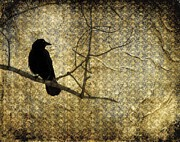 Crow Collage Prints - Crow In Damask Print by Gothicolors And Crows
