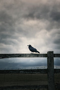 Fear Framed Prints - Crow Framed Print by Joana Kruse