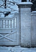 Wooden Stairs Posters - Crow on Snowy Gate Poster by Jill Battaglia