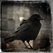Crow Image Prints - Crow Portrait Print by Gothicolors And Crows