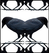 Photo Tapestries - Textiles Prints - CROW Rorschach Print by Alexandra  Sanders