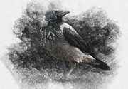 Taylan Soyturk Drawings Prints - Crow Print by Taylan Soyturk