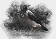 Crow Print by Taylan Soyturk