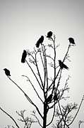 John  Mitchell - Crow Tree