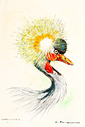 Chalk Drawing Metal Prints - Crowned crane - Balearica pavonina Metal Print by Kurt Tessmann