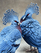 Exotic Bird Paintings - Crowned Victorians by Cara Bevan