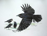 Crows Print by Carol Veiga
