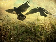Corn Digital Art Prints - Crows Of The Corn 2 Print by Gothicolors With Crows