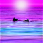 Dolphin Digital Art - Cruisin Together by Holly Kempe