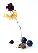 Grapes Art Photo Framed Prints - Crushed Framed Print by Constance Fein Harding