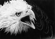 Cry Drawings Framed Prints - Cry of the eagle Framed Print by Renee Delage