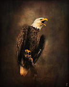 Bald Eagle Framed Prints - Crying for the Lost Framed Print by Jai Johnson
