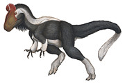 Theropod Framed Prints - Cryolophosaurus, A Large Theropod That Framed Print by H. Kyoht Luterman