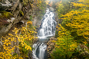 Foliage In White Mountains Posters - Crystal Cascade in Autumn Poster by Susan Cole Kelly
