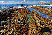 Donna Pagakis - Crystal Cove Tide Pools