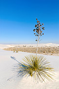 Selenite Framed Prints - Crystal Dune Tree at White Sands National Monument in New Mexico. Framed Print by Jamie Pham
