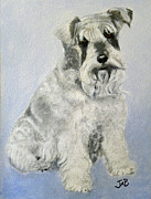 Miniature Schnauzer Paintings - Cuddles by Janice M Booth