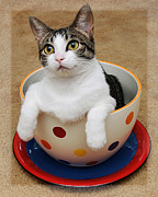 Felines Photo Prints - Cup O Tilly 1 Print by Andee Photography