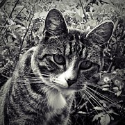 Kitten Prints Photo Posters - Curiosity Poster by Sharon Lisa Clarke