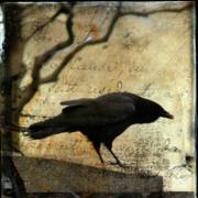 Words Background Prints - Curious Crow Print by Gothicolors And Crows
