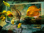 Compilations Posters - Curious Fish Poster by Pamela Phelps