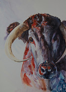 Steer Paintings - Curious by Paula Lay