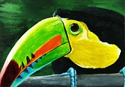 Toucan Paintings - Curious Toucan by Laura Charlesworth