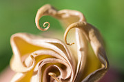 Tendrils Prints - Curled Petals Print by Terry Rowe