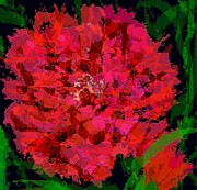 Curly Carnation Print by Navo Art