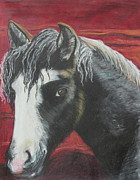 Mammal Pastels Metal Prints - Curly - The Nokota Mustang Metal Print by Jeanne Fischer