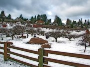 Folkart Photos - Curran Apple Orchard In Orton by Chris Anderson