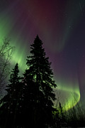 Northern Lights Posters - Curtain of colours Poster by Priska Wettstein