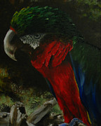Sherry Robinson Art - Curtis the Parrot by Sherry Robinson