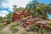 South Dakota Tourism Photos - Custer State Park Ecology by John Bailey