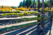 Brian Williamson - Custom Fence line in Napa