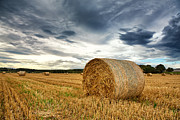 Bales Photo Metal Prints - Cut field Metal Print by Jane Rix