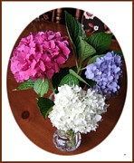 Garden Grown Metal Prints - Cut Hydrangeas Metal Print by Will Borden