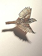 Alfred Ng - cut out sparrow