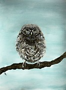 Owl Picture Framed Prints - Cute Baby Owl Framed Print by Leslie Allen