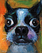 Pet Drawings Prints - Cute Boston Terrier puppy art Print by Svetlana Novikova