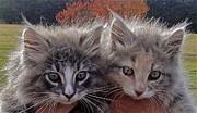 Jennifer Lamanca Kaufman - Cute Feral Kittens