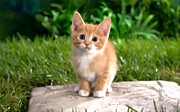 Paws Paintings - Cute little kitten by Lanjee Chee
