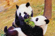 Panda Bears Photos - Cute Pandas Play Together by Lanjee Chee
