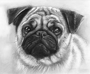 Black-and-white Posters - Cute Pug Poster by Olga Shvartsur