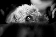 Pups Digital Art - Cute Pup Sneek A Peek by Natalie Kinnear