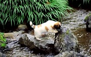 Animal Themes Paintings - Cute Puppy by the Creek by Lanjee Chee